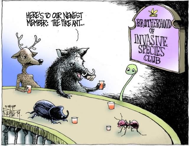 invasive animals cartoon