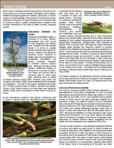 Casuarina decline in forest health hilites